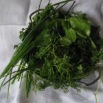 Grüne Sosse: Zutaten