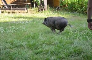 Wilhelm geht ab: Kanonenkugel im Garten